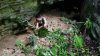 小哥原始森林自制捕猎陷阱, 抓住几只难得的美味, 但一般人不敢吃