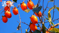 【源味3餐】文旦柚子五花肉 淡淡苦味果香
