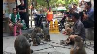 一个男人带5只猢狲街头耍猴, 不料惨遭猴子耍人