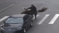 男子骑马闯红灯被车撞倒 马没事人倒地不起
