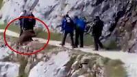 路很窄! 游客将野猪逼下悬崖