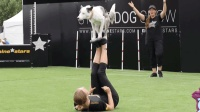 加拿大流浪狗被收养后 变身特技师 和主人配合默契 堪比马戏团
