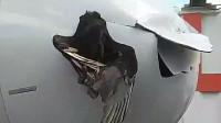 飞鸟空中与飞机相撞击穿机头