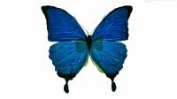 手作光影蝴蝶