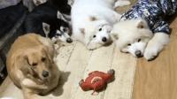 自从养了这五只狗子, 我就没吃过一包完整的零食, 都是泪啊