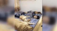 三只狗狗睡得正香, 主人突然放了一个屁, 狗狗反应笑翻众人!