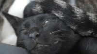 #冬日吸猫#一开始以为猫咪头上戴了个帽子, 仔细查看后笑喷