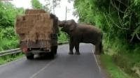 泰国这头史上最任性的大象, 太霸道了, 干脆把马路改名叫象路得了