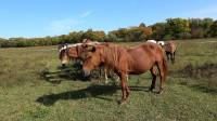 骑上骏马回草原--男博万视觉