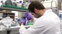 巴西科学家测试可卡因疫苗 或能帮助戒毒