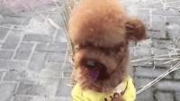 這只狗寶寶被一筐稻草去干什么?