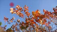 今秋红叶映满山