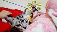 【德国骨科】猫哥哥看到妹妹和两脚兽正在做不可描述之事, 竟然发出了狗叫声!#冬日吸猫#