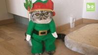 Ins上最火的大眼短毛猫, 一双大眼睛迷倒了多少猫奴们!