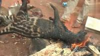 鬣狗称为非洲二哥? 非洲部落: 就是一坨狗肉而已!