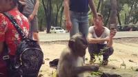 这女人用手逗小猴子的那点-好不害臊