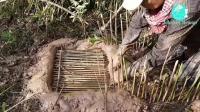男子挖深洞制作竹子陷阱, 一会就抓获了许多乌龟