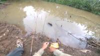 在这种水塘里钓鱼就得用这种小手竿, 钓起来那叫一个爽