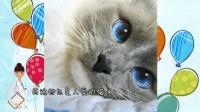 猫咪爱眨眼睛是一种病, 得治!