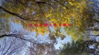 不用去坝上草原和乌兰布统在晋中榆次玉湖公园就能边走边看金秋美景!