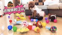 【火龙果的日常】狗狗要疯, 狗粮被扫地机器人吃了!