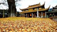 【刘爱柳 迷你Vlog】误入寺庙游客止步区,收获意外的美丽 005