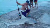 钓鱼见多了, 钓鲨鱼见过没? 鱼上岸都没人敢碰
