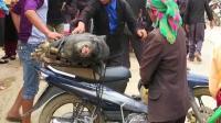 实拍越南农村人怎么卖猪? 农村集市真热闹