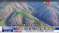 台湾节目: 主持人以为新疆是一片大荒漠, 没想到荒漠变成了塞外江南, 一片花海!
