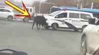 敢这样做, 才是真正的牛!