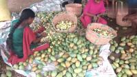 印度女孩每天要切几千芒果, 有10年刀工的老师傅都不敢这样切