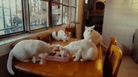 【个人案例】#冬日吸猫# 普洱养猫达人