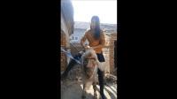 短裙妹子, 你这么喜欢骑羊啊?