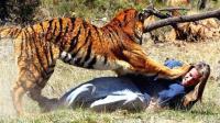 动物伤人的瞬间, 真是让人触目惊心!