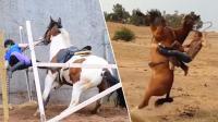 笑死不偿命 出糗! 美女骑马反被马过头摔的爆笑瞬间