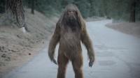苏格兰发现神秘生物,潜伏在山区,被多人次目击