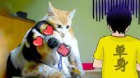 【萌星人de那些破事】宠物秀恩爱, 单身主人虐成狗#不做单身狗#