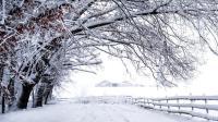 2018年湖北的第一场雪如期而至 各地雪景美不胜收