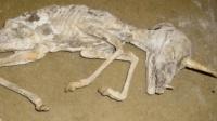 西伯利亚发现独角兽化石,难道神话中的独角兽真的存在?