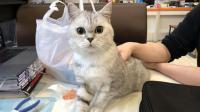 如何用评测玩具的方式来评价一只猫? 【屎宝日常】