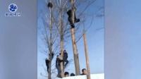 古墓挖掘现场 市民自带脚扣挂树围观
