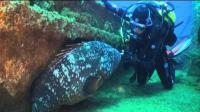 忧郁的石斑鱼