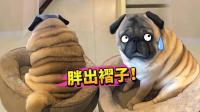 【萌星人de那些破事】狗子胖成这样, 还有救没有?