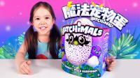Lucas和Lily玩具2018 混血萌娃砸坏了 哈驰 魔法蛋 惊喜蛋 宠物蛋 玩具开箱