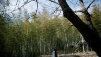 白浅抱着野猫走到竹林间的茅屋, 恍惚间不知该往哪里走!