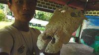 【Wing 迷你Vlog】雄性鳄鱼头骨比人身体还长 042