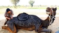 日本艺术家 骆驼身上作画令人惊叹