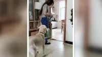 女主打扫卫生狗狗竟做出这么贴心的举动, 让女主心中一片火热!