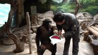 动物园里一场跨越种族和国籍的友情