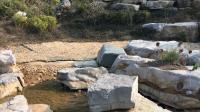 石头与水流